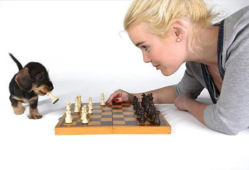 Puppy playing chess with girl